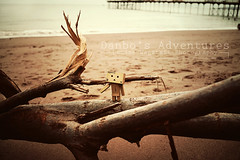 Drift Wood Dreamer (loulovesdanbo) Tags: wood stilllife cute beach toy toys seaside sand scenery couple colorful emotion sweet outdoor character exploring explore bow expressive emotive outing danbo toyphotography softtone revoltech danbos danboard danboru danbomini danbophotography
