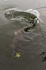 Portmore09Oct14_7232 (Cap'n Fishy) Tags: scotland pike pikefishing