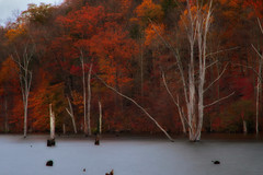 November Blush (SunnyDazzled) Tags: park longexposure november autumn trees red orange fall water ecology newjersey pond colorful long state bare rusty foliage ironworks flooded deadtrees