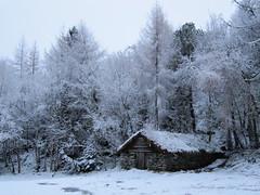 Snow (Mrs.Snowman) Tags: winter snow norway december ålesund borgundgavlen