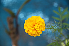 Flowers are forever (Zahid ( At sea now with a super slow net. Thanks f) Tags: flower nature beautiful nikon d610 framebangladesh