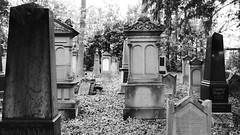 Alzey - Jdischer Friedhof (bilderflut photography) Tags: germany deutschland alemania jewishcemetery tyskland allemagne germania alemanha duitsland rheinlandpfalz rheinhessen jdischerfriedhof almanya alzey niemcy nemecko