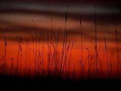 Grassy Sunset (jmpcflckr) Tags: sunset red grass silhouette