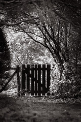 mystischer Garten / mystical garden #2950 / bw (Rebel T2i (digital)) Tags: overgrown garden sw freiburg garten 2014 zugewuchert