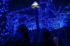 Blue illumination in Naka-Meguro (Kenny Banana) Tags: christmas street xmas blue winter light people tree japan night digital river lumix tokyo illumination olympus christmaslights 20mm meguro waterside omd em5