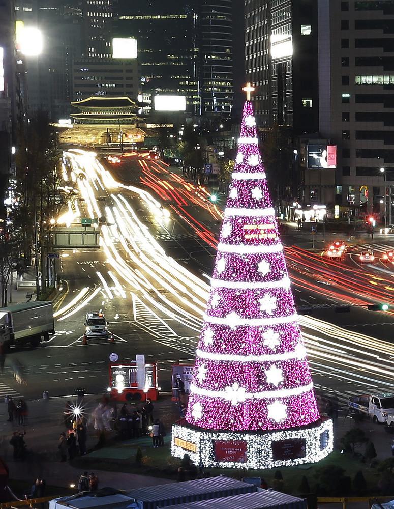 Cây thông Seoul