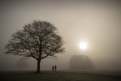 Sherdley......... (Digital Diary........) Tags: uk winter mist fog freezing sthelens merseyside sherdley sherdleypark
