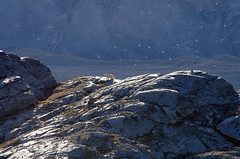 Img2014-08-23_7090P (nils roar) Tags: svalbard polarbear spitsbergen ursusmaritimus isbjrn billefjorden