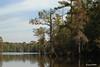 LANDSCAPE (t.rex7000) Tags: landscape alabama bayou swamp spanishmoss cypresstrees deadlake mobiletensawdelta trex7000