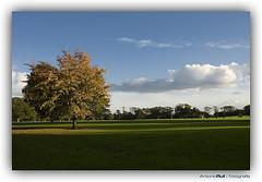 Verde infinito (shumpei_sano_exp3) Tags: autumn ireland sunset sky dublin cloud sun tree sol arbol atardecer cielo nube irlanda malahide otoo