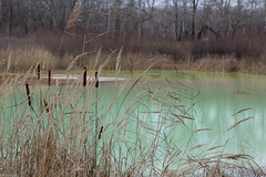 Green Lake (tolkachoffs) Tags: autumn lake tree green reed nature water forest 50mm18 canon600d