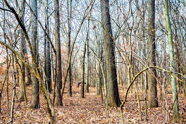 Section Six Flatwoods Nature Preserve - January 6, 2015