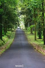 Kebun Raya (terune.sipieet) Tags: bali canon indonesia indo kebunraya bedugul candikuning 60d ekakaryabali