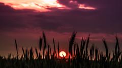 natural skyline (bocero1977) Tags: light sunset sky sun nature colors field silhouette skyline clouds germany landscape corn nikon mood sundown fineart acre