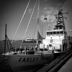 The Farley Mowat (thinkiandy) Tags: ca protect defend sandiegobay conserve dockside seashepherdconservationsociety oceanactivism operationmilagroii