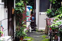 Today's Cat@2016-05-31 (masatsu) Tags: cat pentax osaka catspotting mx1 thebiggestgroupwithonlycats