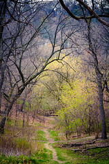 Footpath (A Great Capture) Tags: trees toronto ontario canada tree green forest way spring track photographer branches canadian course route trail walkway footpath pathway springtime on agc 2016 ald jamesmitchell ash2276 adjm ashleylduffus wwwagreatcapturecom agreatcapture mobilejay