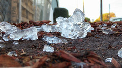 Icy Verge (Theen ...) Tags: ice lumix hardware store melting pov low ground chips bark adelaide cubes discarded bunnings verge thawing theen kenttown