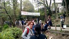 cherry blossom watching in Inokashira Park, Tokyo (milov) Tags: park trip people japan phonecam tokyo video mine blossom cherryblossom sakura hanami inokashira inokashirapark yumie