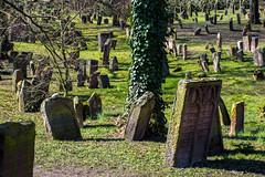 Worms: Heiliger Sand (David Baggins) Tags: friedhof cemetery germany deutschland worms jewishcemetery jüdischerfriedhof rhinelandpalatinate heiligersand d7200