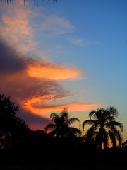 06/16/2016  Sunrise (Jim Mullhaupt) Tags: pictures camera morning pink blue red wallpaper sky orange sun storm color tree rain weather silhouette yellow clouds sunrise landscape photography dawn photo nikon flickr wind florida snapshot picture palm exotic p900 tropical coolpix thunder bradenton geographic sunup nikoncoolpixp900 coolpixp900 nikonp900 jimmullhaupt