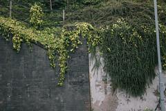 Wall (JacksonSwaby) Tags: street light plants plant brick green nature lamp stone wall fence post