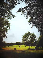 summer (thombe77) Tags: park light summer sun tree se licht sommer sonne baum iphone