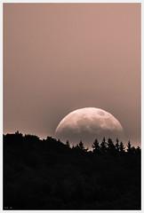 until the dust settles (i.v.a.n.k.a) Tags: sky moon mystery forest nightsky sonyalpha ivanahesova ivanadorn