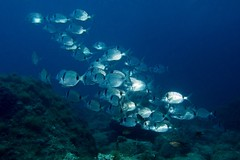 (David Sez) Tags: ocean blue sea uw dive scuba diving buceo fotosub uwphoto