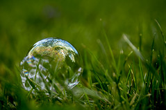 Macro Mondays, Bubbles (anek07) Tags: macro green grass reflections bubbles reflect bubble monday grn grs bubblor bubbla macromondays reflektera
