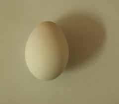 the egg (saramostafa1) Tags: white egg