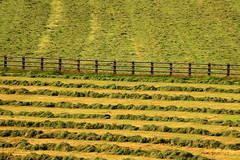 The Cut ........ (acwills2014) Tags: wood summer fence patterns harvest fresh simplicity farmer hay simple minimalistic haymaking fencefriday