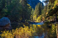 Yosemite Autumn (fate atc) Tags: california autumn usa fall water river fresh yosemitenationalpark sierranevada pinetrees yosemitevalley mercedriver fallcolours