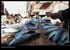 Marrakech (buiobuione) Tags: marocco marrakech