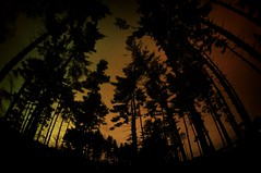 IMG_1839.JPG (Jamie Smed) Tags: park wood autumn trees light shadow ohio sky autostitch orange usa tree fal