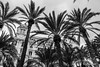 Casa Carbonell (Cmarnav) Tags: bw españa byn canon eos spain ngc palmeras palm alicante topv777 espagne palme spanien palmier 2012 explanada carbonell 600d canonefs1855mmf3556is