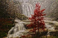 Suutu (s_gulfidan) Tags: autumn rain waterfall autofocus 400faves