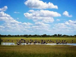 Botswana Hunting Safari 21