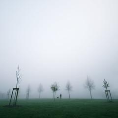 Fog and dog (DzheY photography) Tags: morning trees dog grass fog walk hamburg altona silouettes