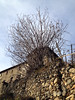 Trees invasion (MIrco R66) Tags: old trees italy panorama alps nature forest landscape build antico lombardia borgo s4 iphone valtellina