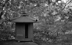 Japanese Lantern (Barry McBeth) Tags: park city oregon garden japanese 50mm dallas nikon bokeh or f2 lantern f3 12 nikkor ilford fp4 ais f12 ddx f3hp ilfotec