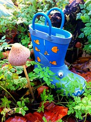 Welly proves he really is a fun guy after all (JulieK (thanks for 7 million views)) Tags: mushroom fungi fungus kanturk leaflitter wellingtonboot iphone4 kanturkcastle uploaded:by=flickrmobile ilobsterit colorvibefilter flickriosapp:filter=colorvibe whereswelly