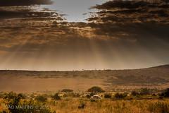 Masai Mara (Joo.Martins) Tags: africa sunset sun sol canon kenya safari mara masai masaimara raiosdesol quenia qunia