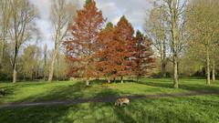 Autumn (Dimormar!) Tags: autumn herfst wandeling hoogvliet zalmplaat