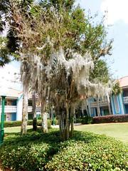 HTMT - Happy Tree-Mendous Tuesday (Visual Images1) Tags: tree orlando florida tuesday caribbeanbeachresort htmt treemendoustreetuesday