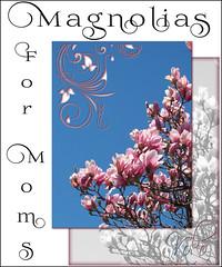magnolias for moms (Koko Nut, it's all about the frame) Tags: pink blue wonder spring blossom frame bloom magnolia koko mothersday kokonut framedflower