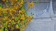 Pol Cosmo / Nieuwland - 4 mei 2016 (Ferdinand 'Ferre' Feys) Tags: streetart pasteup graffiti belgium belgique wheatpaste belgië urbanart graff ghent gent gand graffitiart arteurbano artdelarue urbanarte polcosmo