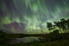 Looking Southwest (John Andersen (JPAndersen images)) Tags: sky night fence reflections pond gate beaver alberta aurora jupiter madden vivenza rokinon14mm aurorahdr