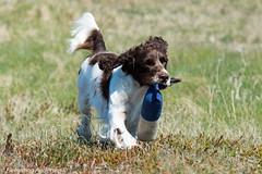 FAN_3650.jpg (Flemming Andersen) Tags: dog water seaside zigzag