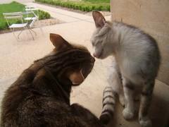 Nez  nez (MAPNANCY) Tags: chats tableau amiti museau